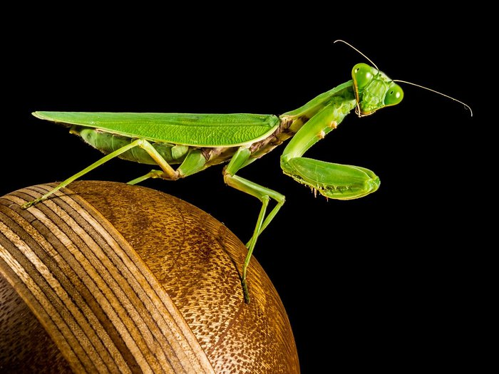 praying-mantis-220987_1280.jpg
